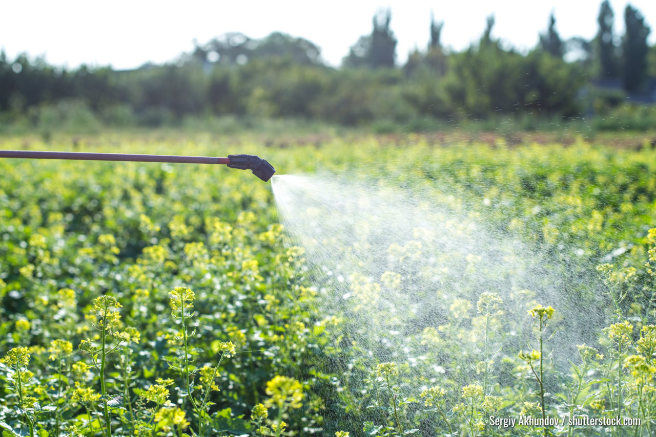 chemical spraying on a field, insect control and disease control on agriculture