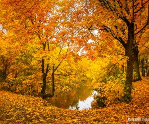 Herbstwaldsee-Landschaft